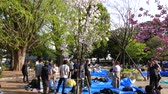 сливы : Young Japanese hang out at hanami cherry blossom festival at Ueno park