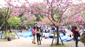 ameixa : Japanese Girls make photose against pink blooming sakura