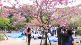ziyafet : People make pictures cherry blossoms trees, Ueno park, Tokyo