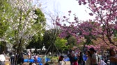 ziyafet : People sitting under cherry trees, Tokyo