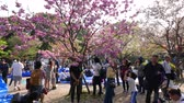 ameixa : People take photos under pink blooming cherry trees, Tokyo, Japan
