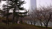 pacing : Korean people walk in park near Lotte World Tower, Seoul
