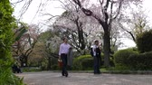 ziyafet : Man take photo of spring blooming cherry trees, Tokyo, Japan