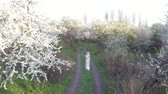 cabelos : Aerial view. Girl and blooming cherry. The girl is walking in nature lifestyle blossoming garden cherry