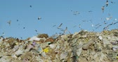 rechazar : View on birds scavenging for food on a landfill dump site.
