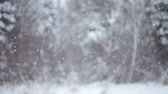 ladin : Big Snowflakes falling down during a Winter Day in Forest Stok Video