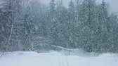 conto : Blizzard in Forest with Massive amount of Snow Falling Down Vídeos