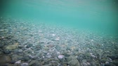 seixos : Underwater footage of A super Clear River Bottom