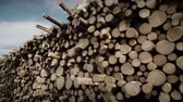 movimento circular : Forestry Theme - SteadyCam Panning of a Huge Pile of Spruce and Pine Trees Stock Footage