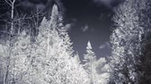 Infrared Panning Video or Rural Forest Nature Landscape during Winter Stok Video