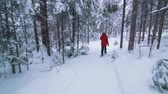 Steadicam Low Angle Back View of Young Woman Walking with Snowshoes in Forest during Winter