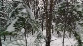 Wild Winter Forest of Spruce, Fir and a few Pine in Quebec, Canadaa Vídeos