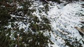 Forestry Theme - SteadyCam Panning over dead Snowy Ground after Clearcut