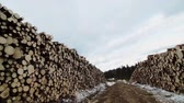 movimento circular : Forestry Theme - SteadyCam Panning of a Huge Pile of Spruce and Pine Trees after Clearcut