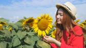 field : Panning shot of beautiful woman happy and enjoy in sunflower field Stock Footage