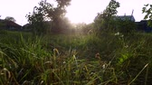 atravessar : Sunset in the countryside. The suns rays pass through the grass. Sunny summer evening. Windless weather.