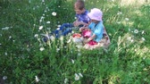 sister : Teen boy and girl child eats wild strawberry on the meadow. Kids really like strawberries. Tall grass grew on the forest glade. A lot of camomile flowers. Summer sunny day in the forest.