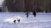 koňmo : SLOW MOTION: A girl galloping on a horse at a gallop. A horse is dragging a snowboarder guy on a rope. A snowboarder rides on a snowboard in snowdrifts. Girl jockey and guy snowboarder train in pairs. A sunny winter day.