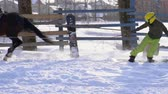 eyer : SLOW MOTION: A girl galloping on a horse at a gallop. A horse is dragging a snowboarder guy on a rope. A snowboarder rides on a snowboard in snowdrifts. Girl jockey and guy snowboarder work out a jump through the springboard. A sunny winter day. Stok Video