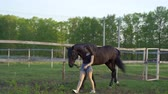dark haired : T-shirt and denim shorts leads on a leash. Evening walk and grazing horse in the meadow. Summer sunny evening.
