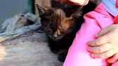 fofinho : Child girl caresses a street homeless kitten. Baby and love for animal, cat. Stock Footage
