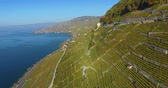 leman : flying over vineyard in lavaux switzerland