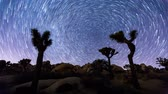 Joshua Trees night timelapse with star trails, Joshua Tree National Park, California Stok Video