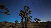 Joshua Trees night moving timelapse. Joshua Tree National Park, California