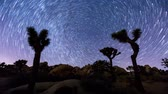 Joshua Trees night timelapse with star trails and zoom in effect, Joshua Tree National Park, California