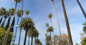 Driving through Palm Trees on a street in Beverly Hills, CA, USA Stok Video