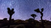 Joshua Trees night with star trails and zoom out effect, Joshua Tree National Park, California