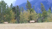 banff : A deer grazing on a glade in the park of Canadian