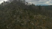 jev : Slow aerial flight over broken trees on the hill, with dark clouds on the sky. Natural forest disaster.