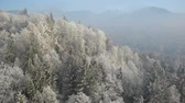 aerial : Aerial perspective, slowly raise and left pan, over frosty sunny forest and landscape. Stock Footage