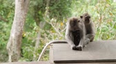 doze : Sleeping monkeys. with cub. Monkey forest in Ubud Bali Indonesia.