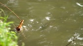 decoy : Little boy tries to catch a fish on a slice of bacon. Lumpini park. Bangkok, Thailand. Stock Footage