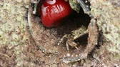 warning : Crab crawling in the hole, covered with shells. Turkey.