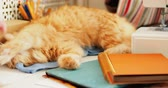 papírnictví : Cute ginger cat is lying among office supplies and sewing machine. Fluffy pet playing with man hand on stationery. Cozy home background.