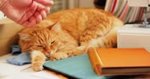 gyömbér : Cute ginger cat is sleeping among office supplies and sewing machine. Fluffy pet dozing on stationery. Cozy home background.