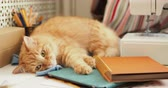 prazer : Cute ginger cat is sleeping among office supplies and sewing machine. Fluffy pet dozing on stationery. Cozy home background.