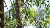 branches : Natural background with tree branches. Green foliage with sun reflection. Stock Footage
