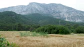 caracol : Wheat field at the foot of the mountain. Wheat ears are densely occupied by snails. Kemer, Turkey. Stock Footage