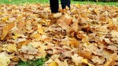ahornbaum : Woman kicks the fallen maple leaves in park. Autumn outdoor activities. Stock Footage
