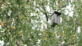 abedul : Wooden birdhouse attached among the birch tree branches. Autumn foliage with yellow leaves Archivo de Video