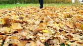 akçaağaç : Woman kicks the fallen maple leaves in park. Autumn outdoor activities. Stok Video