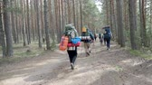 TVER, RUSSIA - May 02, 2019. Group of tourists walking through pine tree forest. Hiking in sunny spring day. Dostupné videozáznamy