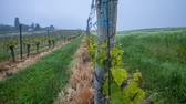 geneva : Swiss vineyard timelapse
