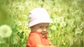 smell : Baby playing in a meadow full of dandelions.