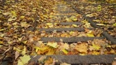 steppe : Walking down the stairs in autumn park. Forest among leaves. 4K steadicam shot ProRes HQ codec. Stock Footage
