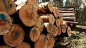 резать : Pile of wood wooden logs in forest 4K